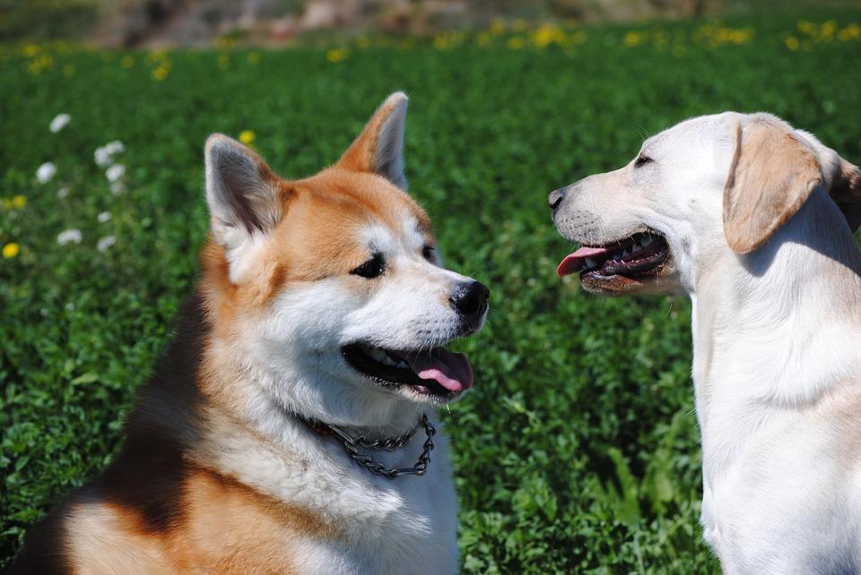 Il padrone risponde anche dal punto di vista penale del disturbo arrecato dal suo cane se questo abbaia troppo